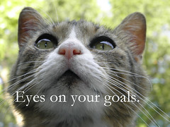 Eyes on Your Goals