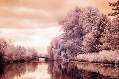 Le marais audomarois (juillet 2012) (jeje62) Tags: ir eau infrared marais digitalinfrared infrarouge bacove audomarois