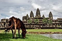 Horse grazing at Angkor Wat