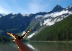 (*reina*) Tags: park mountain lake butterfly glacier national avalanche