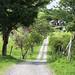 Il sentiero del camping di San Augustin