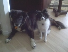Toula and Bentley (WHATADOG) Tags: toula whatadog dogcamp flickrandroidapp:filter=none