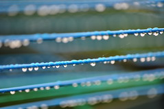 June&July in the UK (CarolineG2011) Tags: rain drops line dorset weymouth washing