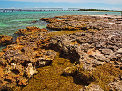 On the Rocks: Little Bahia Honda (Phil's 1stPix) Tags: park trip beach nature honda geotagged island kayak natural florida outdoor wildlife kayaking bahia recreation paddling geotag floridakeys ecosystem floridastatepark oldbridge monroecounty kayaktrip wildflorida floridabeach bahiahondastatepark lowerkeys olympuscamera realflorida bahiahondachannel keysbeach olympuse600 littlebahiahonda rocketfishpolarizer