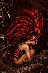 redbird (janmichael127) Tags: red bird fashion photography michael jan vincent rocky castillo gathercole poks pokleng