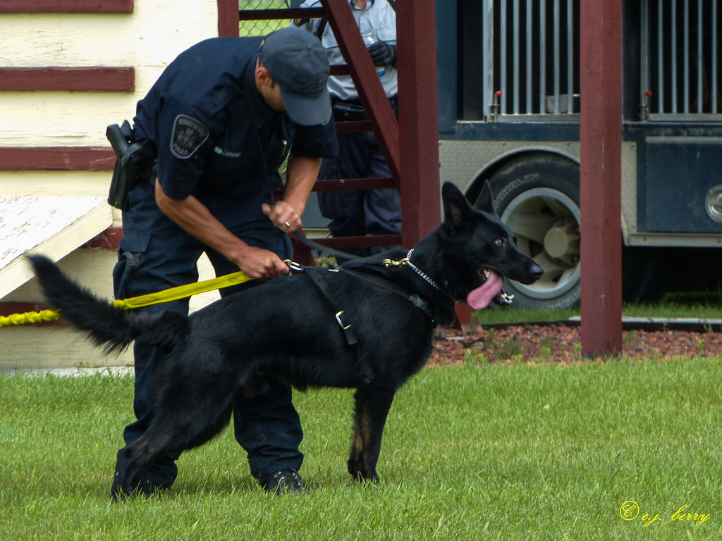 how to become a k9 police officer canada
