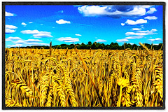 Day 239 of 366 - Field of Dreams! (editsbyjon) Tags: phototoaster picsart lightroom 645pro painterly coventry sky texture skyline outdoor serene bright photoborder field landscape