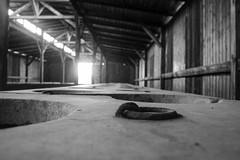 20130801Auswitch II Birkenau06 (J.A.B.1985) Tags: auswitch poland polonia iiww worldwar iigm guerramundial holocaust holocausto soah