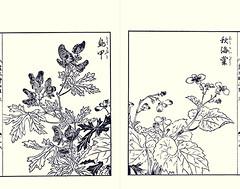 Monkshood and hardy begonia (Japanese Flower and Bird Art) Tags: flower monkshood aconitum chinense ranunculaceae hardy begonia begoniaceae yasukuni tachibana kano woodblock picture book japan japanese art readercollection