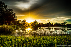 Low POV (DonMiller_ToGo) Tags: sunsetmadness sunsets nature reflections goldenhour d5500 lake florida hdr 3xp millerville onawalk outdoors sunsetsniper sun hdrphotography sky nik