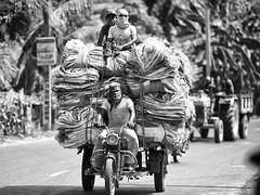 West Bengal (daniele romagnoli - Tanks for 14 million views) Tags:    indien india romagnolidaniele d810 nikon asia  inde indiana indiani  strada street road bianconero biancoenero bw indie calcuta calcutta blackandwhite monocromo monochrome kolkata westbengal bengala