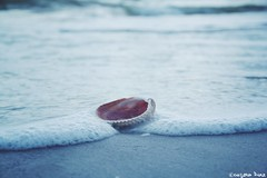 The voice of the sea speaks to the soul. ~ Kate Chopin  (gusdiaz) Tags: nature beach sand waves bubbles ocean shell vacation summer florida cape haze beautiful pastel colors pasteles playa arena sol naturaleza hermoso bokeh dof canon