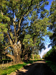 El rbol y el camino. (jagar41_ Juan Antonio) Tags: arboles arbol campo camino caminos imagendecampo