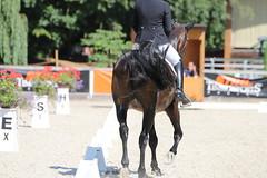 IMG_7545 (dreiwn) Tags: dressage dressur dressuur pferd reitturnier turnierreiten pferdesport horse horseback horseriding equestrian reitverein dressurprfung kandare doublebridle reiten pferde reitplatz ridingarena