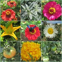 flores y frutos (cerezas123) Tags: flowers frutos tomates naturaleza abejas colores alegria verano summer ramo de novia margaritas calabacines