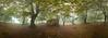 La casita del bosque (DRGfoto) Tags: casa casita borda bosque chabola haya hayedo