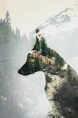 (Dynamutt) Tags: belgian shepherd dog malinois double exposure canon portrait nature mountain wanderlust colorado outdoor animals pets