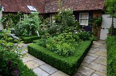 The Coach House Open Garden - Chiddingfold (Mark Wordy) Tags: thecoachhouse godalming surrey ngs nationalgardensscheme opengarden courtyard paths box hedge chiddingfold roses cardoon