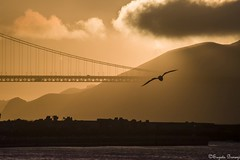 Golden Gate Bridge (Joy Forever) Tags: sun goldengate goldengatebridge sanfrancisco california sky evening bird sunset silhouette