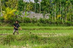 _DSC3952_Bali_09_16 (Saverio_Domanico) Tags: bali indonsie munduk voyage