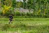 _DSC3952_Bali_09_16 (Saverio_Domanico) Tags: bali indonésie munduk voyage