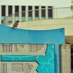 (Jon-F, themachine) Tags: jonfu 2016 olympus omd em5markii em5ii em5mkii em5mk2 em5mark2  mirrorless mirrorlesscamera microfourthirds micro43 m43 mft ft     snapseed japan  nihon nippon   japn  japo xapn asia  asian fareast orient oriental aichi   chubu chuubu   nagoya  outdoors  animal animals   fauna birds bird  birdie birdy sparrow sparrows