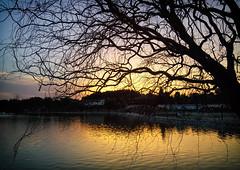 Death of Sun (Ahmet Okkol) Tags: autumn spring lgg3 tree treeoflife lake izmir bucaglet glet water sunset gnbatm gne sun ahmetokkol