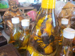 Snake and Scorpion Honey