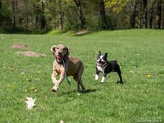 Dogs having fun ! 20.04.2012