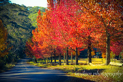 Colourful Autumn (mukunkanap) Tags: road street blue autumn panorama house mountain holiday toronto ontario canada mountains color colour tree fall wet rain fog corner canon fence garden season gate track mt bright fallcolors pano cottage autumncolors mount trail hedge wilson aussie canopy soe colorsoffall 500d colorsofautumn supershot mywinners abigfave fallintoronto anawesomeshot frhwofavs wardenwoodpark