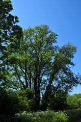 natuur tussen Amsterdam en Spaarndam, mei 2012 (wally nelemans) Tags: holland tree groen nederland thenetherlands natuur boom mei 2012 nearamsterdam