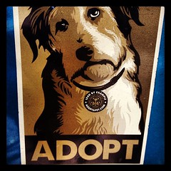 Spotted this Shepard Fairey inspired pet adoption sticker on an old Jeep Cherokee on Portland's SE Taylor street. (pdx3525) Tags: usa square portland portlandoregon multnomahcounty southeastportland scottcountyiowa