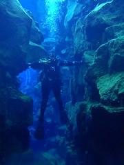 Diving Silfra 13