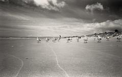 Gulls (2) (fawcetownsley) Tags: zorki newzealand blackandwhite bw holiday film beach nature 35mm lens diy natural grain fsu wideangle developer nz sw hp5 russian schwarzweiss chemicals lightmeter ilford l39 fixer zorki4k russar russar20mm westoneuromaster screwlens ilfosol3