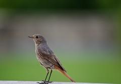 Bird (BJFF) Tags: bird closeup nahaufnahme vogel nikkor55300mm nikond5100