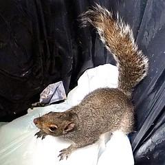Little rascal! (tina negus) Tags: water squirrel bin rutland barnsdale