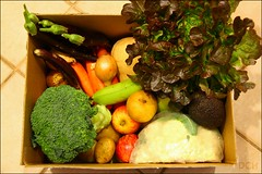 The Organic Collective, Week 22 (suavehouse113) Tags: food apple vegetables fruit avocado box eggplant australia broccoli banana lettuce potato plasticbag squash carrot pear cauliflower produce butternutsquash onion organic fremantle freo westernaustralia freshproduce homedelivery mynewcamera leafygreens hamiltonhill japaneseeggplant butternutpumpkin nashipear theorganiccollective