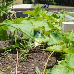 Rehoboth Teaching Garden | 2012-06-24  13-00-57 thumbnail