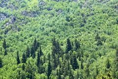 Slopes of Himalayas (Partha) Tags: summer india snow green canon valley himalaya himachalpradesh kinnaur kalpa chitkul kinner incredibleindia baspa reckongpeo
