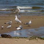 Birds on Morgan Mudflats thumbnail