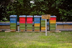 180/366: Beehives of Tempelhof (Rrrodrigo) Tags: day180 project3662012 280612 28jun12
