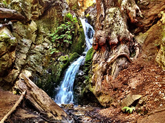 too much saturation (Benzadrine) Tags: california cali forest waterfall stream pacific bigsur hike saturation redwoods iphone pfeifferstatepark