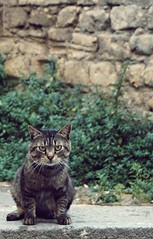 Furry Buddy (somnium_ars) Tags: street summer italy plants pet animal wall cat way fur eyes sitting campania coat watching ears whiskers paws nise