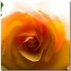 (sergio.pereira.gonzalez) Tags: flower color colour macro fleur photoshop flor couleur lightroom canon400d sergiopereiragonzalez httpfocale3fr
