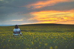 in fields of gold (Tasha Mare) Tags: flowers sunset portrait girl field yellow marie photography gold golden nikon hour tasha d7000 thephotographyqueen tashamariephotography teapalm