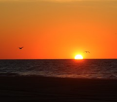 daybreak over the ocean at Ocean City Md. with seagulls fling over the ocean. (hbk1955) Tags: sunrise summer ocean oceancitymd morning seagulls fling