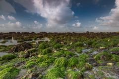 Samphire Hoe (framboise_sjb) Tags: 2016 kent samphirehoe landscape landscapephotography zeiss zeissdistagon18mm zeissdistagon zeissdistagon3518mm zeissdistagont3518ze englishchannel dover foreshore seascape seaview
