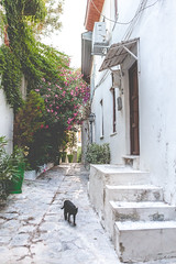 (Krisdoffer McCandless) Tags: cat narrow alley road street turkey summer sun colorful marmaris old town white green walls
