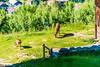 DSC_9513 (Costi Jacky) Tags: france naturereserve parcdemerlet
