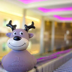 Welcome our new #jagdhofspa mascot - any name suggestions? #sheratonfuschlsee #deer #spa #betterwhenshared #starwood #holiday #hotel #wellness #pool #fuschlsee #jagdhof (sheratonfuschlsee) Tags: sheratonfuschlsee betterwhenshared fuschlsee salzburg hotel